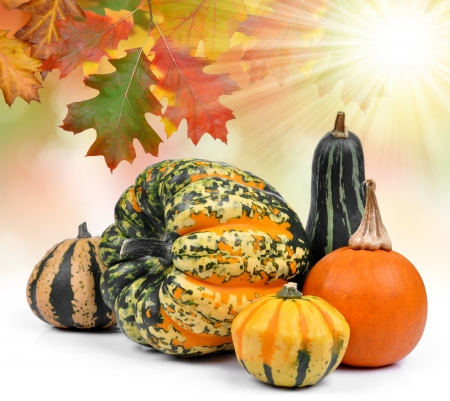 ash gourd: Harvested pumpkins with autumn leaves