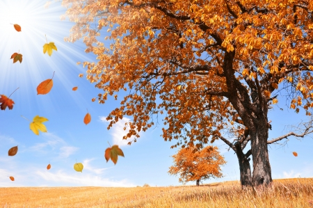 falling leaves: Autumn landscape with the falling leaves