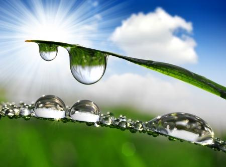 gotas de agua: Hierba fresca con gotas de rocío de cerca