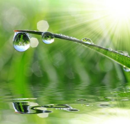 waterbesparing: Dauw druppels close-up