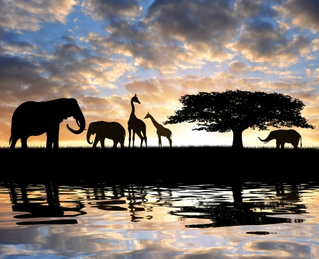 savanna: Silhouette elephants with giraffes in the sunset  Stock Photo