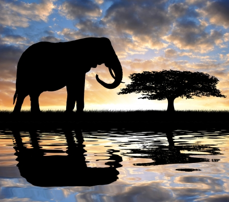 youngly: Silhouette elephant in the sunset