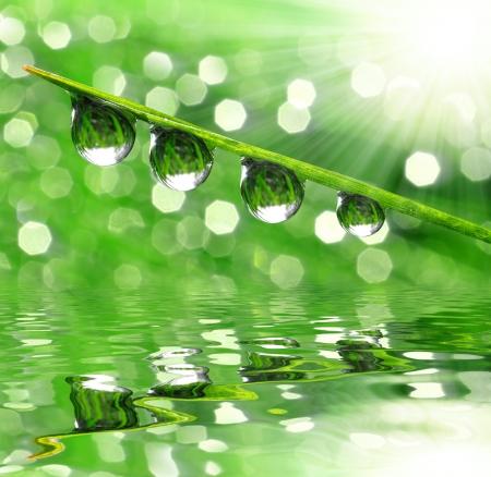 dew drop: Dew drops close up  Stock Photo