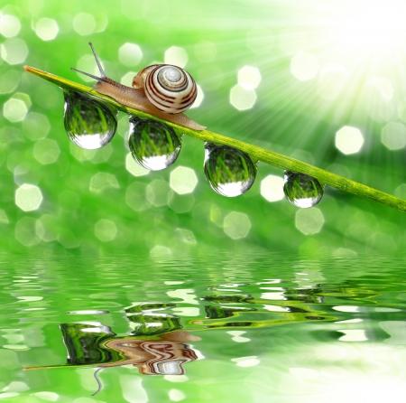 dewy: Snail on dewy grass  Stock Photo
