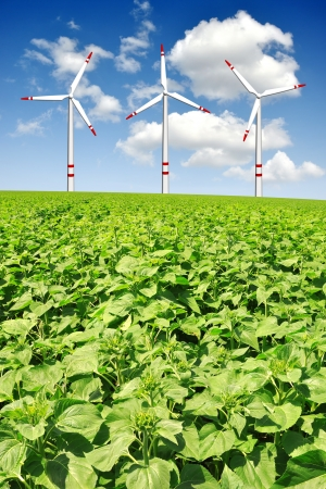 sunflower field with wind turbines Stock Photo - 16612153