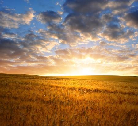 coucher de soleil: coucher de soleil sur les champs de bl�