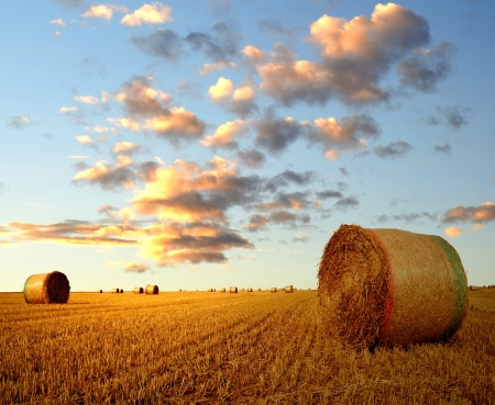 haystack: Straw bales on farmland in the sunset