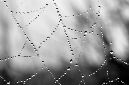 spider web with dew drops closeup photo
