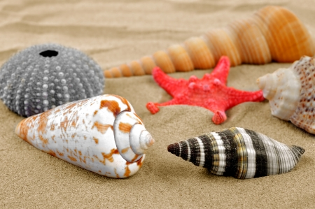 rare animals: starfish and shells on the sand  Stock Photo