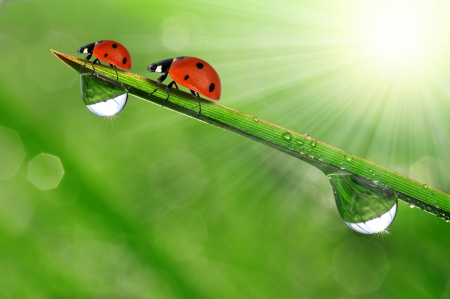 dew drop: Fresh morning dew on a spring grass and little ladybug Stock Photo
