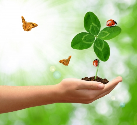 four hands: growing green clover with the ladybirds and butterfly Stock Photo