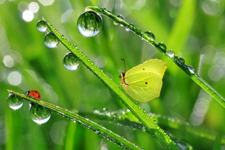 dew drop: fresh morning dew with butterfly and ladybird