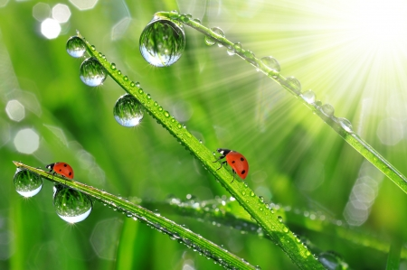 fresh morning dew and ladybird  Stock Photo - 17395462