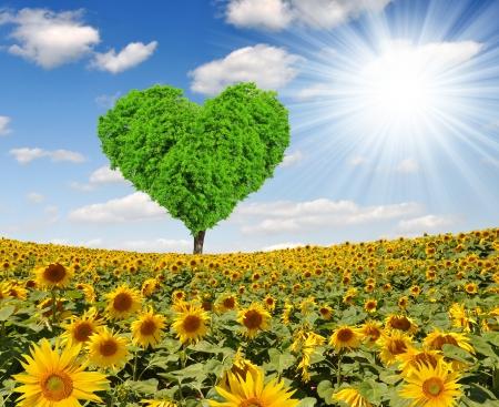 Spring tree in the shape heart on sunflower field Reklamní fotografie