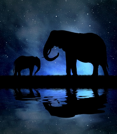 youngly: Silhouette elephants in the night sky