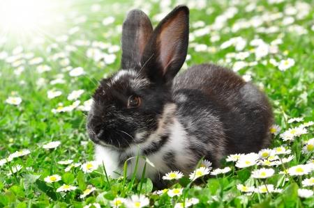 bunnie: rabbit in grass