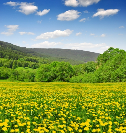 bohemia: Spring landscape in the national park Sumava - Czech Republic Stock Photo
