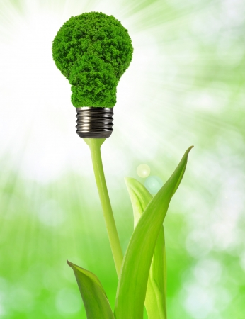 eco energy bulb Stock Photo - 17649065