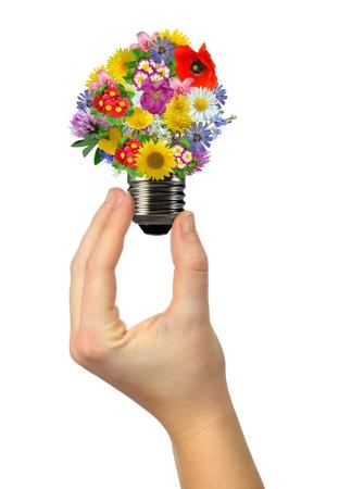 bulb flowers photo