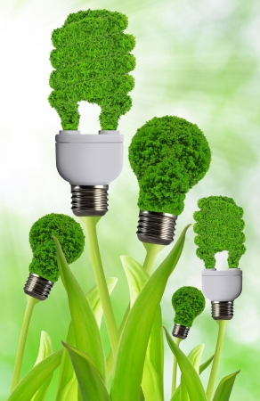 eco energy bulb  Stock Photo - 17866136