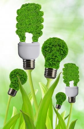 eco energy bulb Stock Photo - 17866136