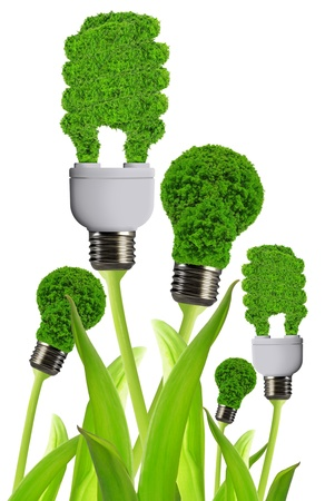 eco energy bulb  Stock Photo - 17897368