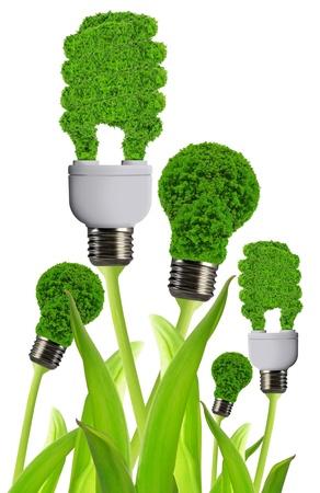 welfare plant: eco energy bulb