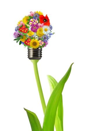 economic botany: bulb from flowers Stock Photo