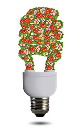 economic botany: bulb flowers