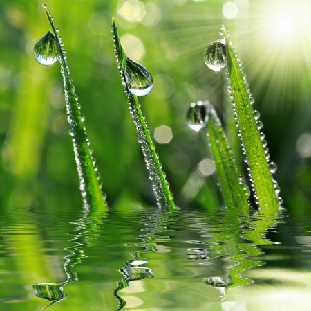 sun drop: Fresh grass with dew drops close up Stock Photo