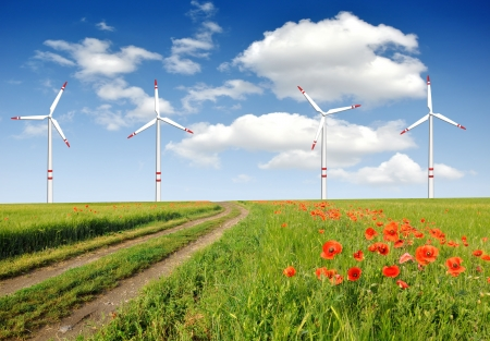 wind turbines in wheat field photo