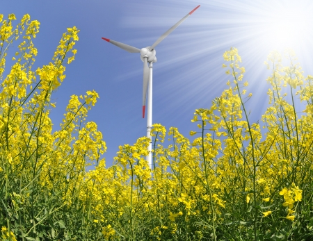 rapeseed field with wind turbine against the blue sky  photo