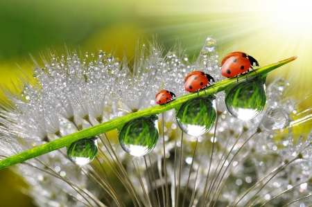 dew with ladybugs Stock Photo