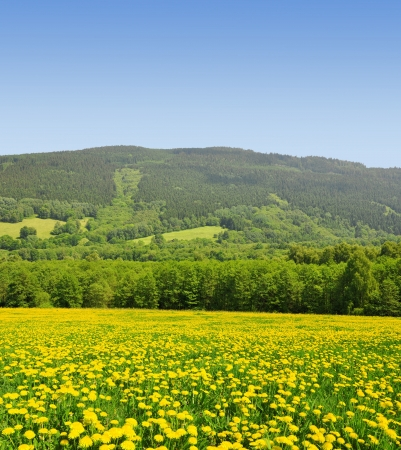 clearing: Spring landscape in the national park Sumava - Czech Republic Stock Photo