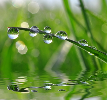 mirror on the water: Fresh grass with dew drops close up