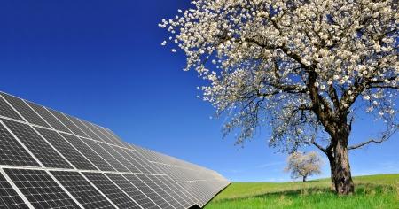 energia solar: paneles de energía solar con el árbol en flor