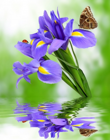 purple iris flower with butterfly morpho on green background photo
