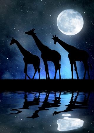serengeti: herd of giraffes in the night sky with moon