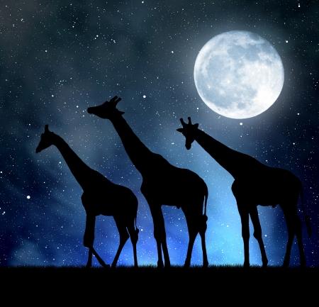 twilight: herd of giraffes in the night sky with moon