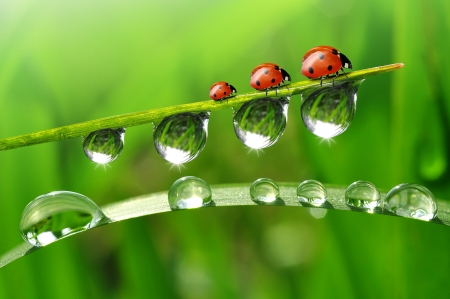 fresh morning dew and ladybird Stock Photo - 20328658