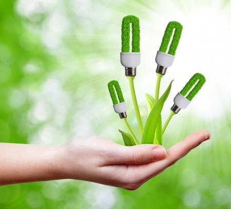 sustentabilidad: bulbo de la energ?a ecol?gica en la mano