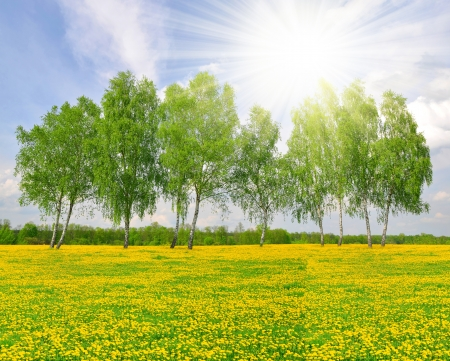 Spring landscape with birch tree
