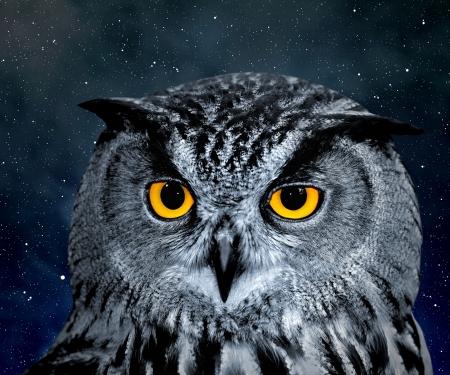 dark eyes: Eagle Owl, Bubo bubo