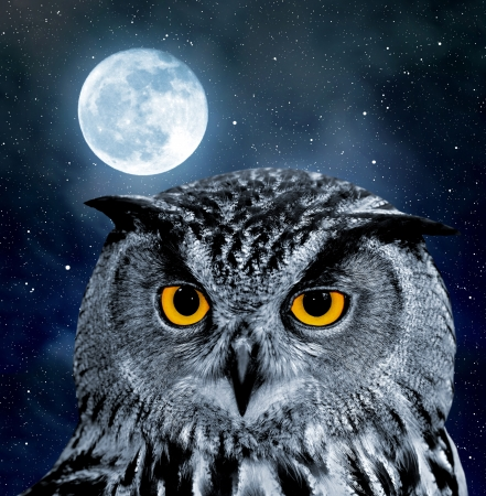 night owl: Eagle Owl, Bubo bubo