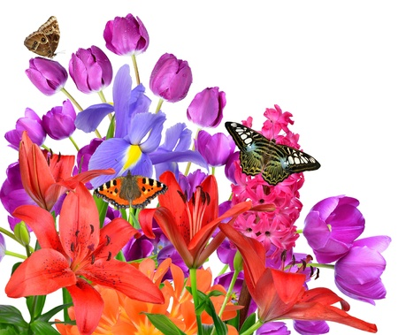 Spring flowers with butterflies isolated on white background
