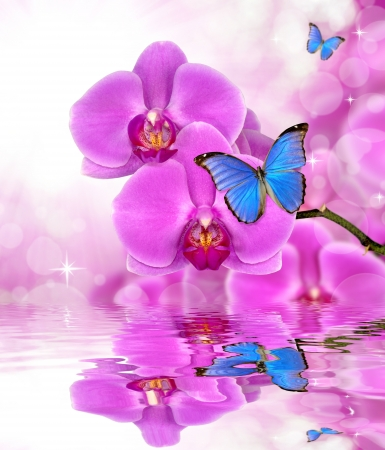 Beautiful purple orchid with butterflies Morpho reflection on water level  Stock Photo