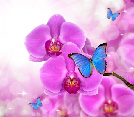 carpel: Purple orchid with butterfly  - close up with shallow DOF