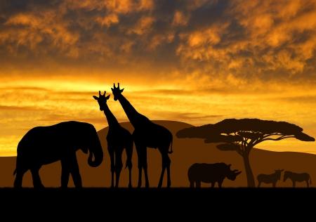 giraffe over sunrise  photo