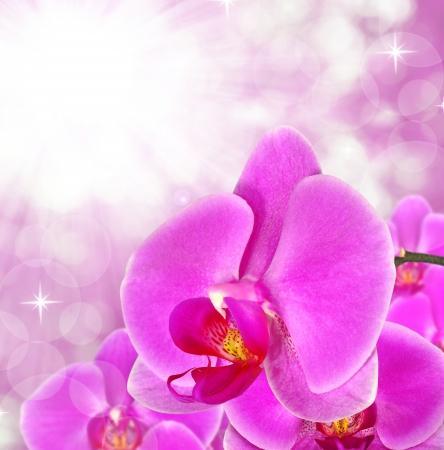carpel: purple orchid