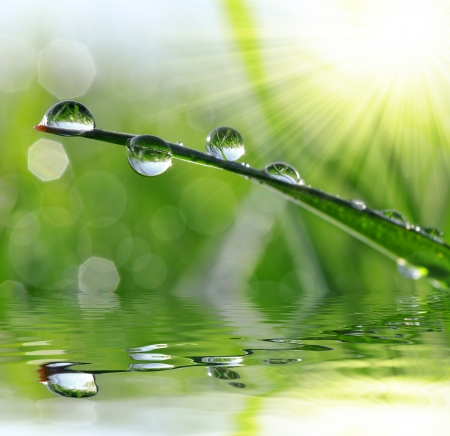 mirror on the water: Fresh grass with dew drops close up Stock Photo